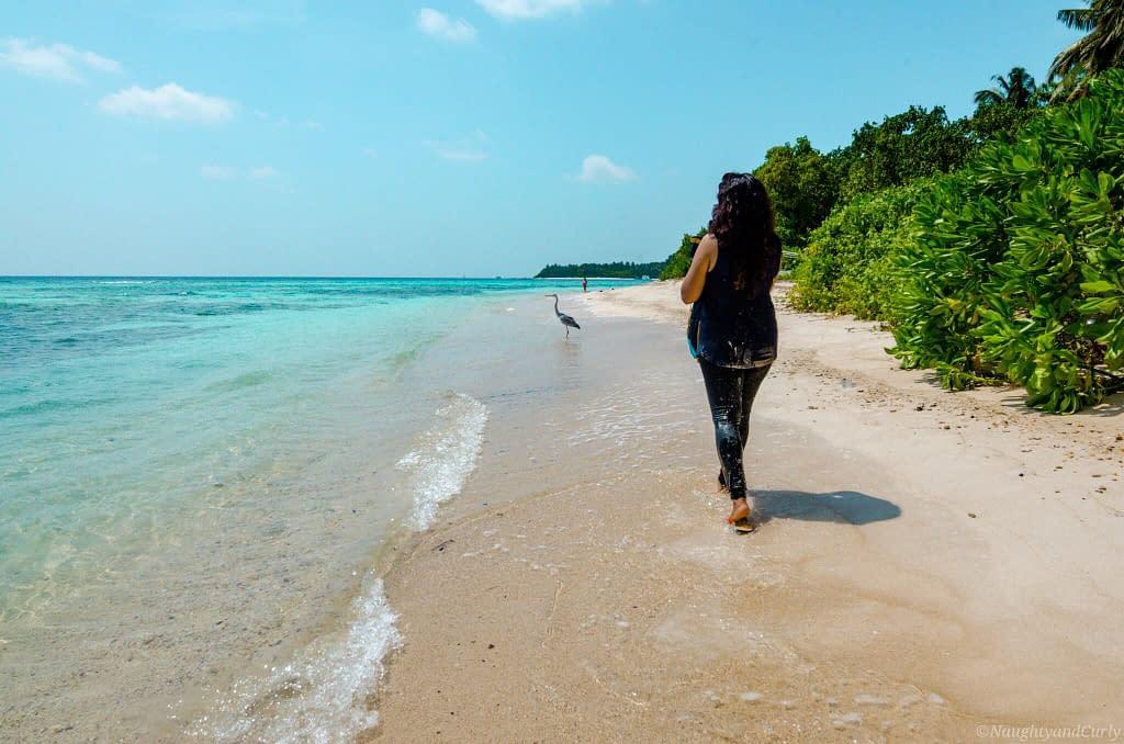 rasdhoo_heron_bikinibeach_maldives