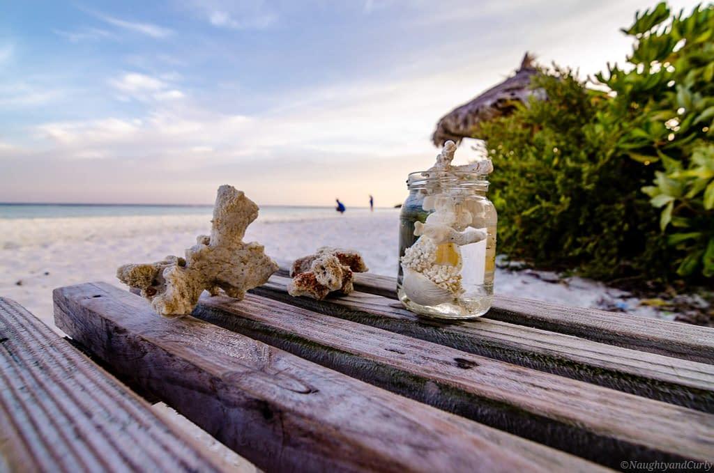 seashells_rasdhoo_corals_maldives