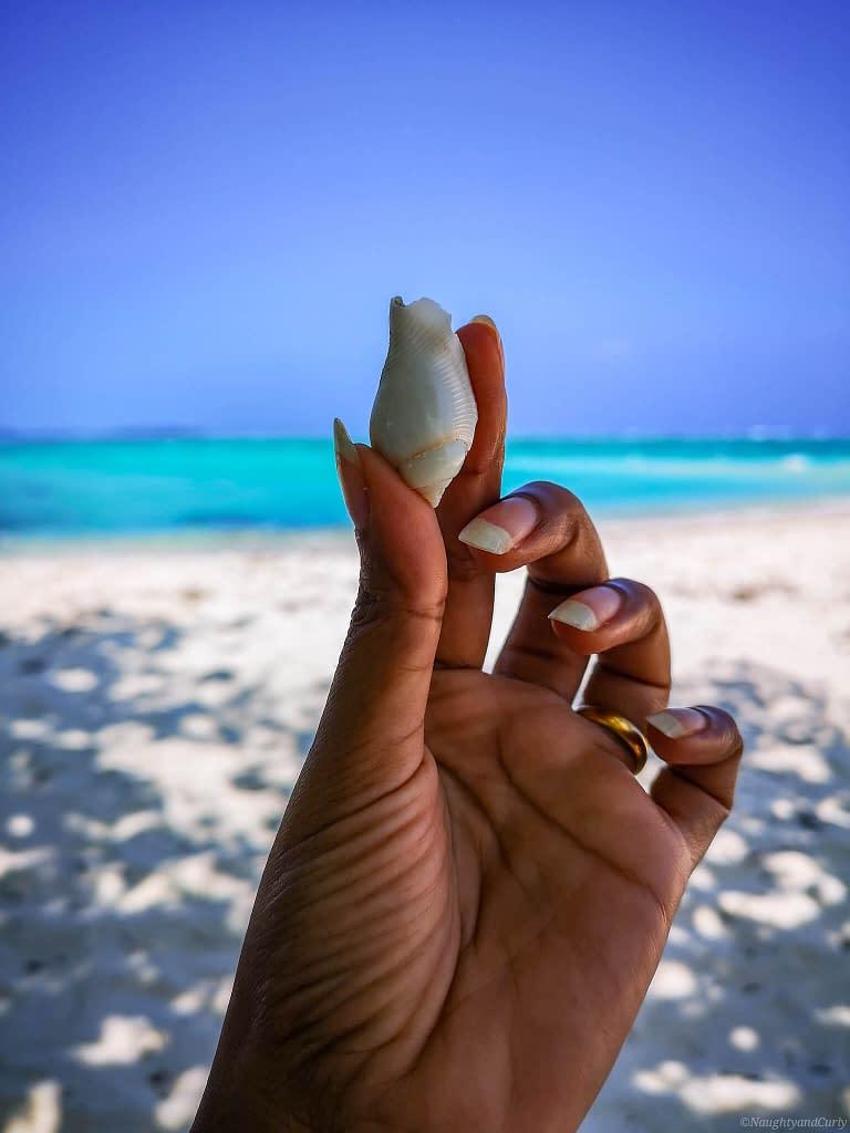 seashells_maafushi_maldives